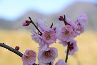 春の陽光の当麻散策  当麻寺周辺 - 峰さんの山あるき