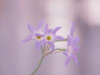 やっぱり花は可愛い。 - yohira's photo diary
