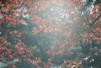 紅葉 - photomo