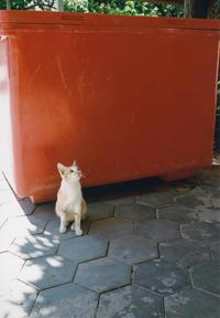 Cambodia #8 - Souvenir~散歩写真のおすそわけ~