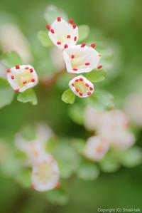 植物写真家の、分別 - ひつじ雲日記