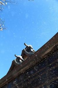 雪間の青空~欅の森の神社から~ - 心の色~光生写真館~