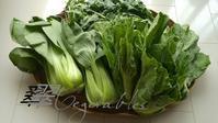 千葉の大網白里からの新鮮野菜届きました - 料理研究家ブログ行長万里  日本全国 美味しい話