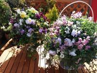 ホワイトデーにお花を贈ろう! - aile公式ブログ