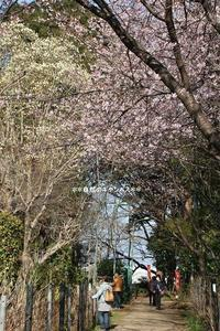 川口市の興禅院さんも花盛り(^^♪ - 自然のキャンバス