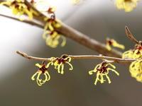 まず、咲く・・・ - 自然がいっぱい3