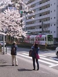 桜 - 心に残る風景と、、!