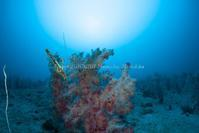 気持ちよい海 - Diving Life ~Aita pe'a pe'a~