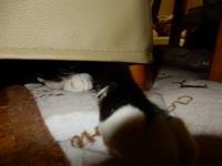 のら手 - 愛犬家の猫日記