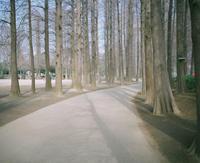休日の散歩道 - BobのCamera