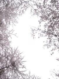 春よ来い - イチとMTBライフ