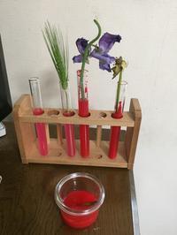 植物の解体と観察 ポプリ作り - わたし的日常☆東京☆おもちゃで幼児教育