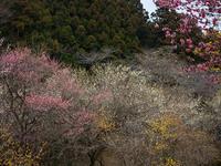 初春 - 日光を漂ふ