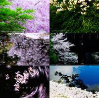 桜の準備はじめました。♯3 - あ お そ ら 写 真 社