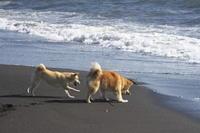 sakura&waku(5cut) あげない!沼津の海岸編 -     ~風に乗って~    Present