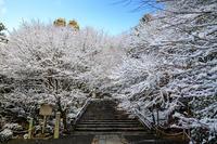龍安寺の雪景色(前編) - 花景色-K.W.C. PhotoBlog