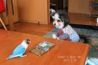 B.B & Chipo* 続・おやつ実験!? - FUNKY'S BLUE SKY