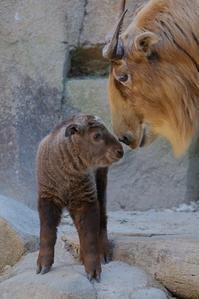 赤ちゃんは人気です - 動物園に嵌り中