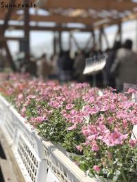 2日間ありがとうございました!One-day Market + 2017 Spring - さにべるスタッフblog     -Sunny Day's Garden-