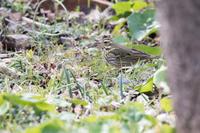 赤穂御崎公園の野鳥 - うちのまわりの自然新聞