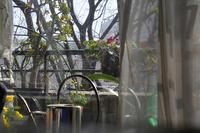 曇りの日にもベランダが明るくなりましたね - 生きる歓び Plaisir de Vivre。人生はつらし、されど愉しく美しく
