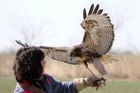 スカイトライアル開催のお知らせ - T/Hの野鳥写真-Ⅱ