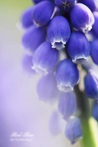 おしゃべり - Flores*Flores