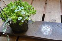 季節を感じる空間!第3弾「ちっちゃな寄せ植え作りのススメ」編 - 岡山の実家・持家・空き家&中古の家をリノベする。