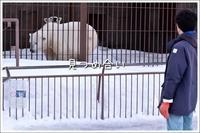 ほっきょくぐまのいちにち 2017/03/12 - メタのマクロ視点な奇跡なんて白熊の為