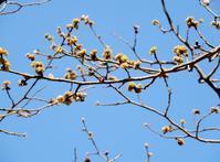 黄色い花・2種 - 【出逢いの花々】