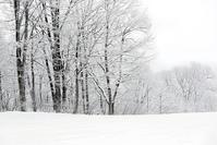 雪景色 - 一人の読者との対話