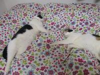 眠る猫たち。 - まったり麻呂~ん☆