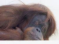 3月16日(木) 開き直り - ほのぼの動物写真日記