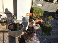 さやかちゃんお嫁入りのご報告♪(その2) - もももの部屋(家族を待っている保護犬たちと我家の愛犬のブログです)