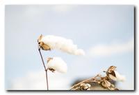 白い雲。 - 気まぐれフォト