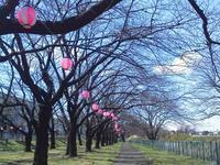 ●梅か桜か・・・中途半端 - 太陽と大地のエクボ3