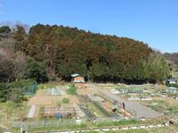 摘み草 - 光さんの日常