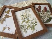 押し花の額装 - handmade flower maya