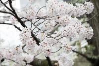 卒業・入学写真 - 出張撮影オレンジ公式ブログ