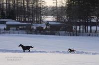子馬も走る。 - ekkoの --- four seasons --- 北海道