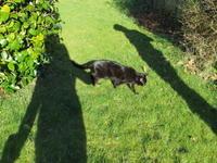 ミンちゃんの盲目生活の様子 - 英国猫づくし便り