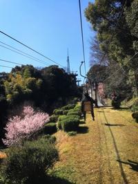 一年ちょいぶりに松山へ3 市内観光2 松山城内編 - ホリー・ゴライトリーな日々