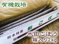 有機栽培の水田ごぼう 収穫は4月下旬より!!今年も元気に成長中! - FLCパートナーズストア
