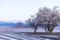 阿武隈川物語・・・・春雪の朝 - 花のこみち