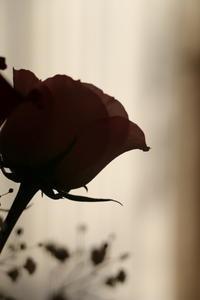 バラの香り - ココロのままにゆるりぱちり