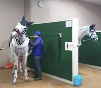 馬主席にて初観戦♪@東京競馬場 - ♪♪♪yuricoz cafe♪♪♪