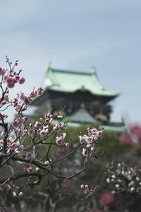 「お城の春」 - hal@kyoto