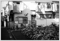 千住散歩 -565 - Camellia-shige Gallery 2