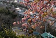 見下ろす桜。。。 - DAIGOの記憶