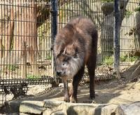2017年3月 とくしま動物園 その2 - ハープの徒然草